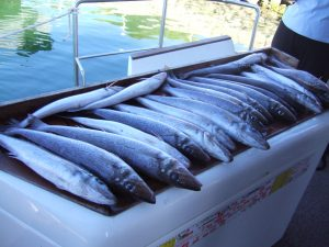 KG Whiting