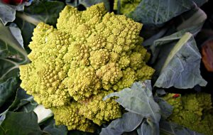 cauliflower-roman-1522873_1920