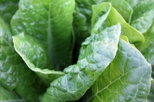 spinach-1149790_1280